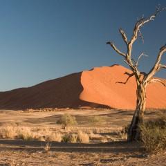تقاوت Desert و Dessert و Desert