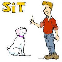 تفاوت sit at و sit on در زبان انگلیسی